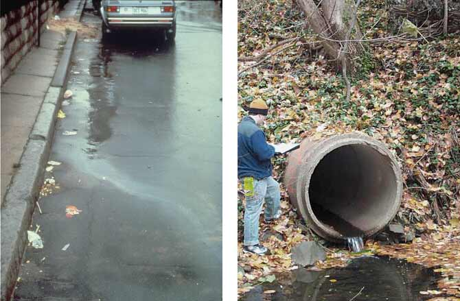 Trees and Stormwater Runoff - Center for Watershed Protection